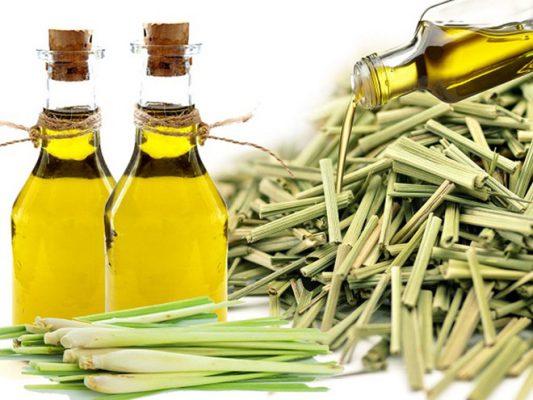 Tinh dầu sả chanh có nhiều công dụng đối với sức khỏe và môi trường sống