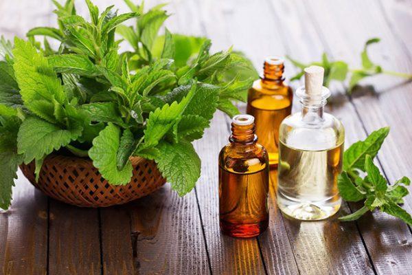 Tinh dầu bạc hà có tên gọi tiếng Anh là Peppermint Essential Oil